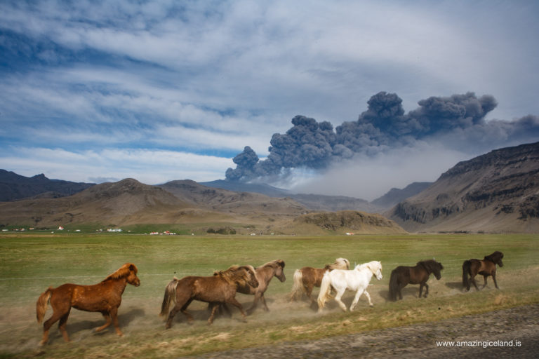 Horses and erupting Eyjafjallajokull volcano on south coast of Iceland