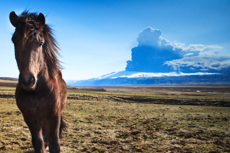 Horse and the 2010 Eruption in Eyjafjallajokull volcano on south coast of Iceland