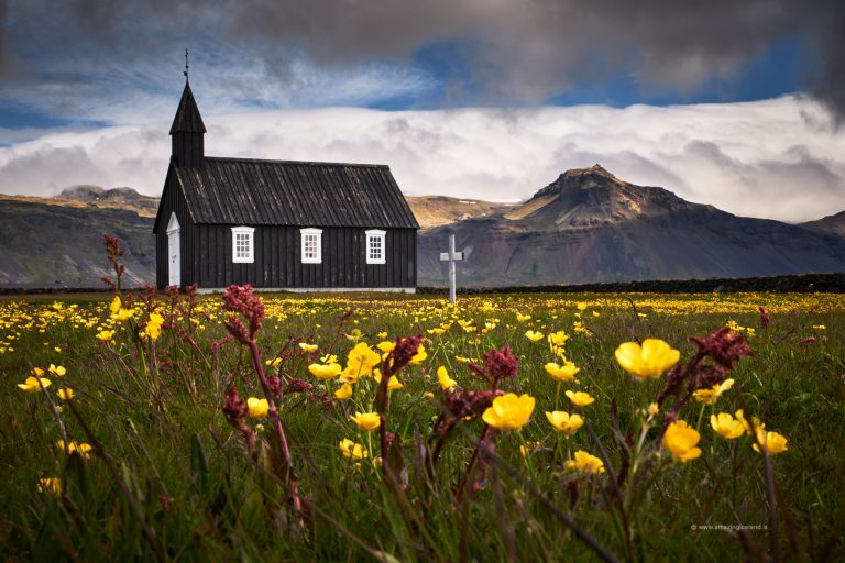 flower field in front of Black church at Budir