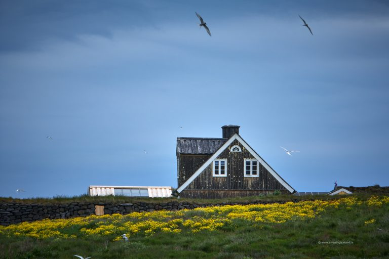 Farmhouse and arctic tern in Snæfellsnes Iceland
