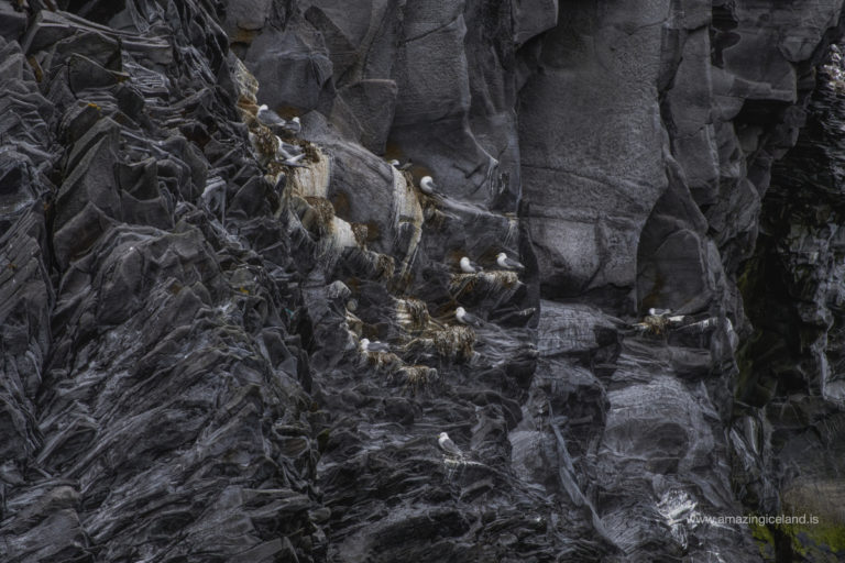 Seagulls sitting in a cove at Hellnar in Snæfellsnes Iceland
