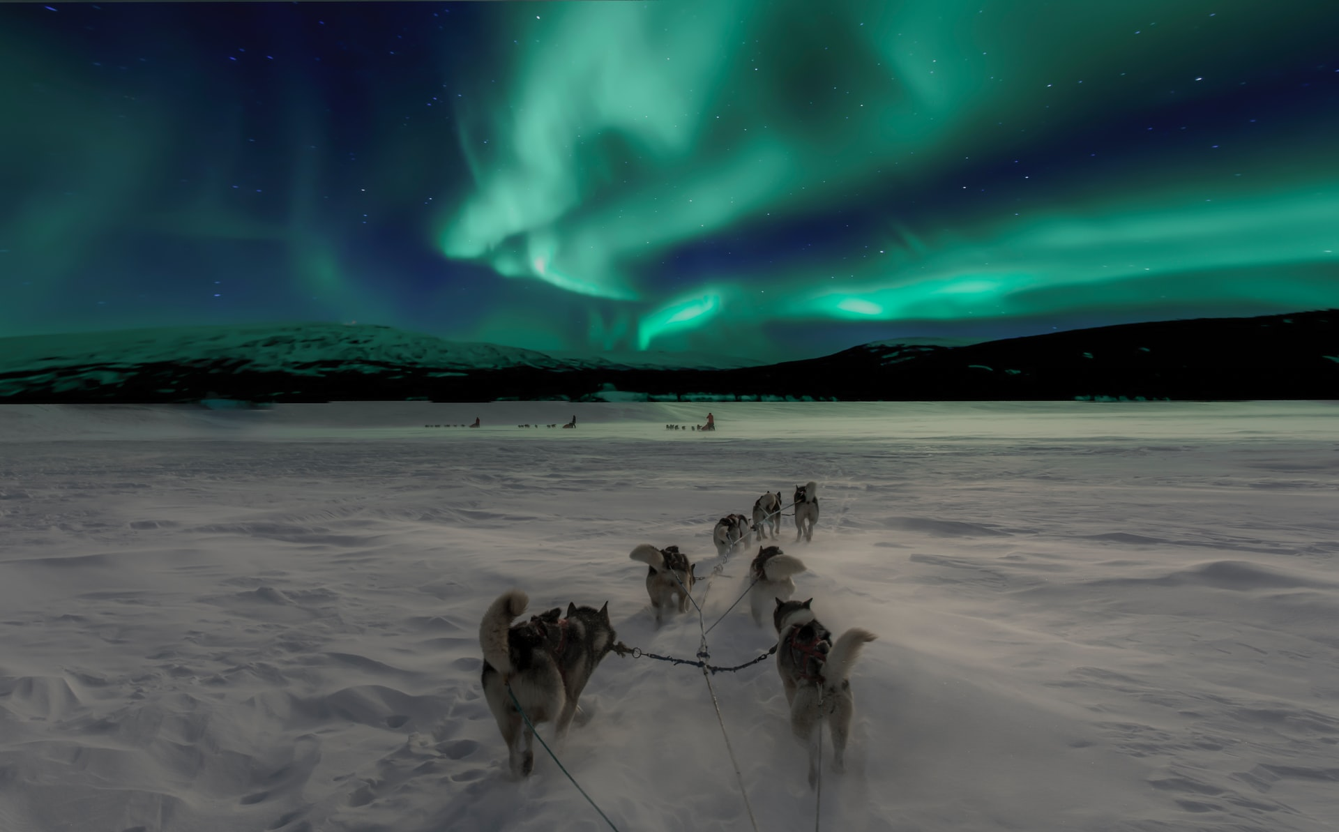 Dog sledding under aurora sky